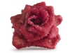 2. Red rose stabilized and crystallized in sugar.