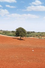 The area's rich, rust-coloured soil sees many fruit and olive trees flourish.