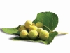 Casa Calongo's many luscious gardens are filled with fresh fruit, including these delicious figs.