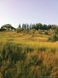Tuscany's golden hillsides are an unforgettable sight.