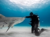 De Gelder has taken some of the most famous people in the world diving with sharks and admits that every single one of them was scared, but that they came out of the water saying it was one of the most incredible things that they have ever done in their life | Photo Courtesy Of Paul De Gelder