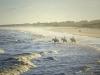 Horseback riding on Sea Island beach