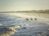 Horseback riding on Sea Island beach