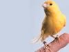 When time permits, Fausto Di Berardino, is also a one-of-a-kind bird-breeder
