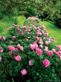 While venturing through the multiple garden rooms, it becomes very easy to lose your way in the fantasy world created by large shrubs, hedges and flowers.
